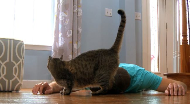 When This Guy Faked His Death, His Cat's Reaction Was Equally Cute And Hilarious 2